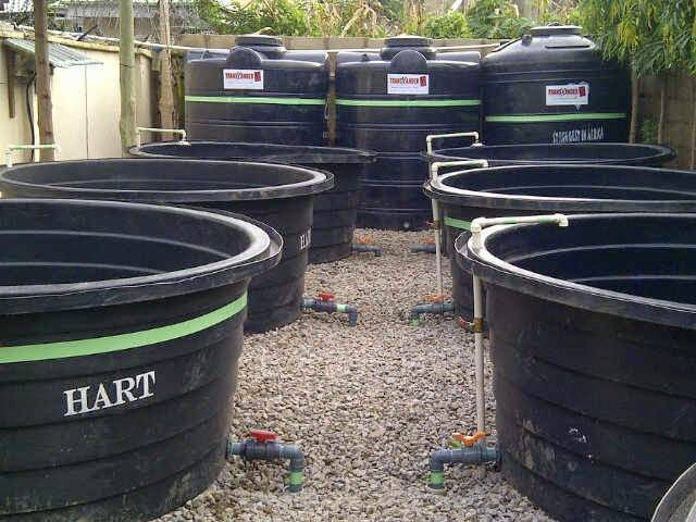 Start Your Own Home Based Fish Farming Business for Profit