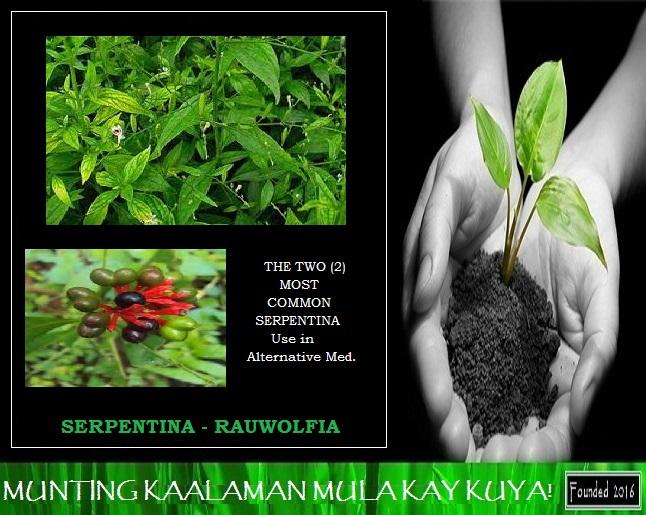 Halamang Gamot @ Sakit (Learn & Treat Your Self): ANO BA ANG