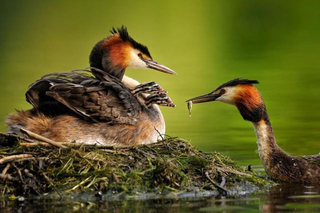Cool Animals Pictures: Cool Animals And Birds Photos