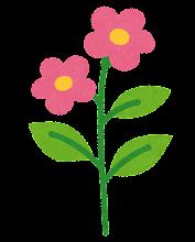 花の成長過程のイラスト5