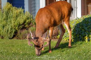 Deer Pender Island Poets Cove