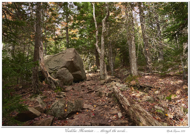 Cadillac Mountain: ... through the woods...