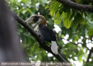 Birdwatching and wildlife tour in West Papua of Indonesia