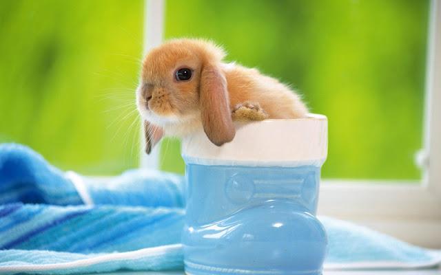 Lief klein konijntje in een laars