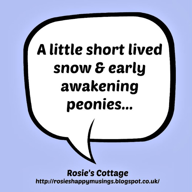 A Little Short Lived Snow & Early Awakening Peonies...