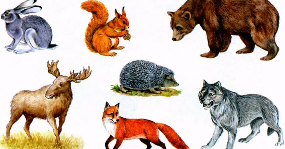 многих картинки лисы волка зайца медведя ежика разные пожелания