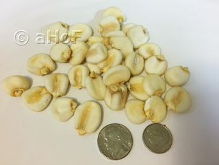 Nixtamalized Dried Corn next to a nickel and a dime