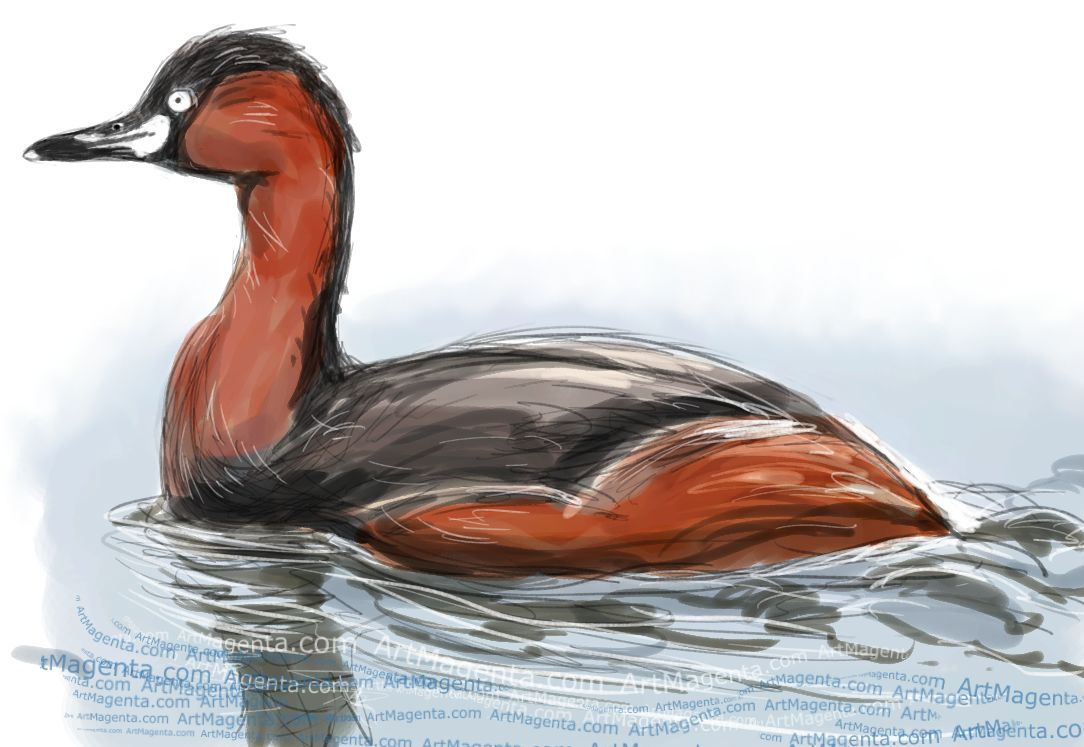 Little Grebe sketch painting. Bird art drawing by illustrator Artmagenta