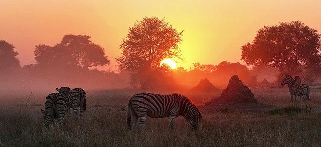 Moremi Wildlife Reserve ,Botswana