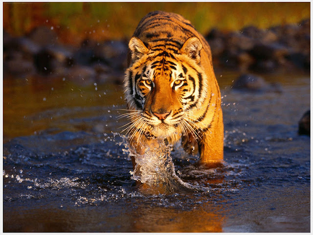 Jim Corbett National Park (Oldest National Park of India)