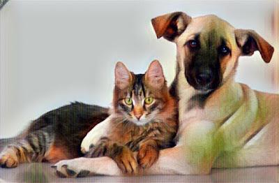 Perro abrazando a un gato