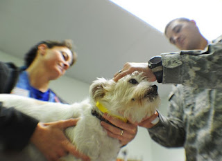 Tricks for Giving Medicine to Your Dog