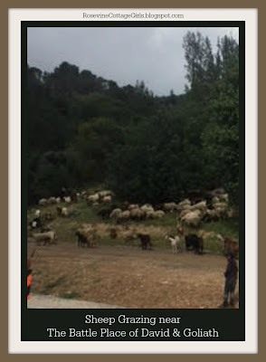 David and Goliath - photo of sheep grazing with shepherds watching their sheep near the valley of Elah
