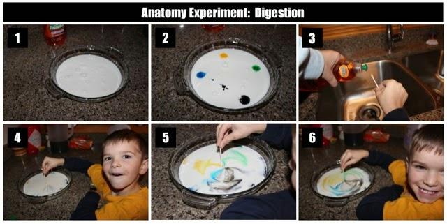 Image Result For Kids Liver Coloring