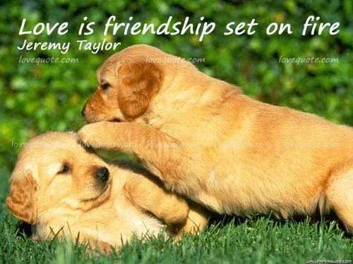 Funny Pictures Gallery: Puppies quotes, puppy quotes