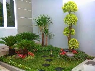 desain taman minimalis menggunakan bonsai anting putri