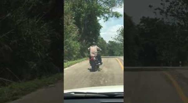 Serangan Ular Kepada Penunggang Motosikal !!