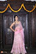 Raashi Khanna Pongal Photoshoot-thumbnail-13