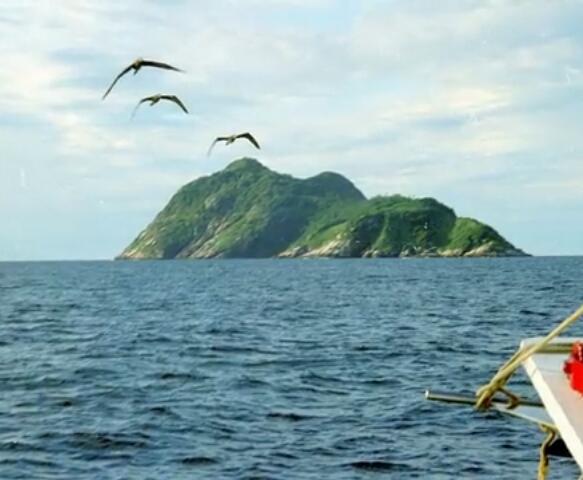 Snake Island in Brazil