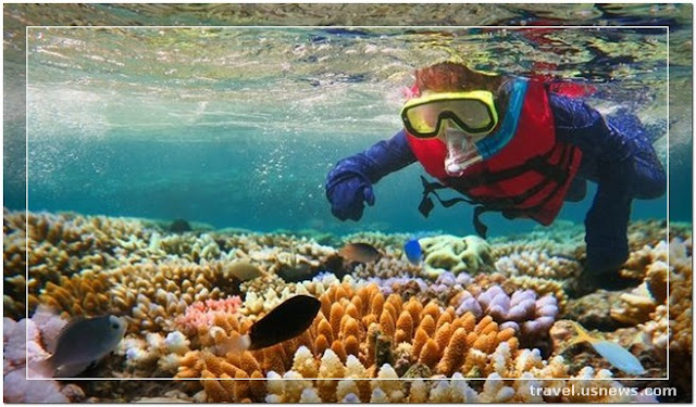 Diving Spots and Snorkeling Spots - Top 7 Best Places to Travel in Great Barrier Reef at Least Once in Your Life Time