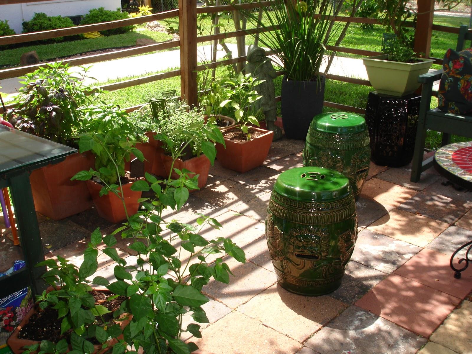 the garden cat cottage: clean galveston backyard garden tour 2013