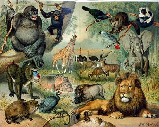 Pecinta Alam: Flora dan Fauna di Hutan Hujan Tropis