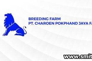 Lowongan PT. Charoen Pokphand Jaya Farm Pekanbaru Januari 2019