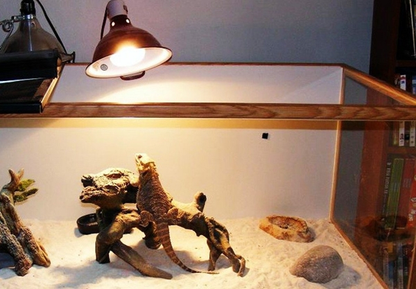 Everything You Need To Know About Bearded Dragons How To Raise A Baby Bearded Dragon Properly