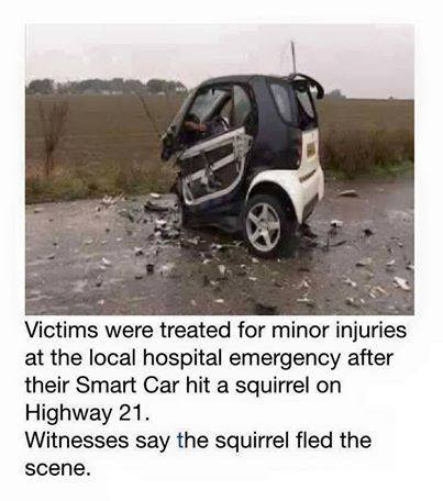 Hopefully the squirrel is OK...