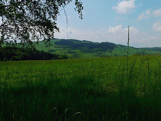 Widok na Łysą Górę (niem. Blücher-Höhe, 708 m n.p.m.).