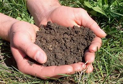 Soil: It's Not Dirt - cover