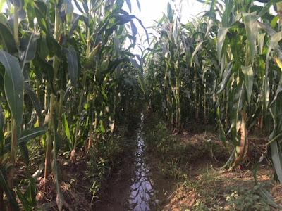 Menko Perekonomian Puji KLHK Benahi Reforma Agraria