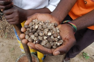 Planting seeds in Africa