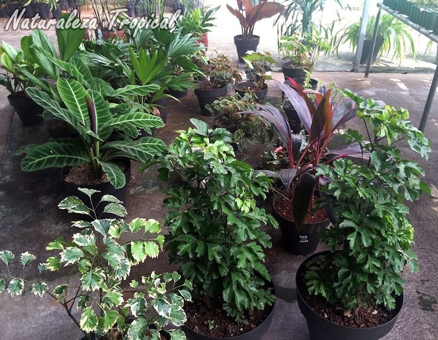 Tipos de plantas ornamentales for 2 plantas ornamentales