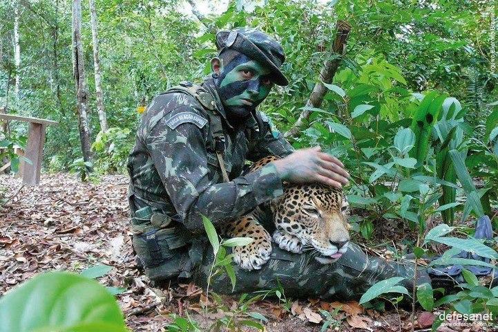 VALTER DESIDERIO BARRETO: O BRASIL AGRADECE AS FORÇAS