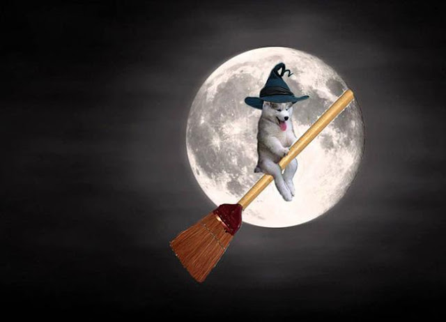 """Chùm ảnh chế của chú chó Husky """"ngã cây"""" nhất quả đất"""