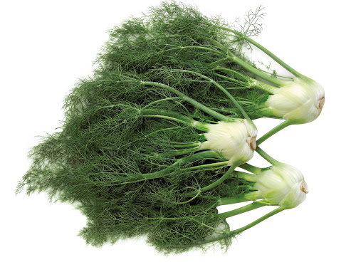 Problems With Digestion Try Fennel Organic Food