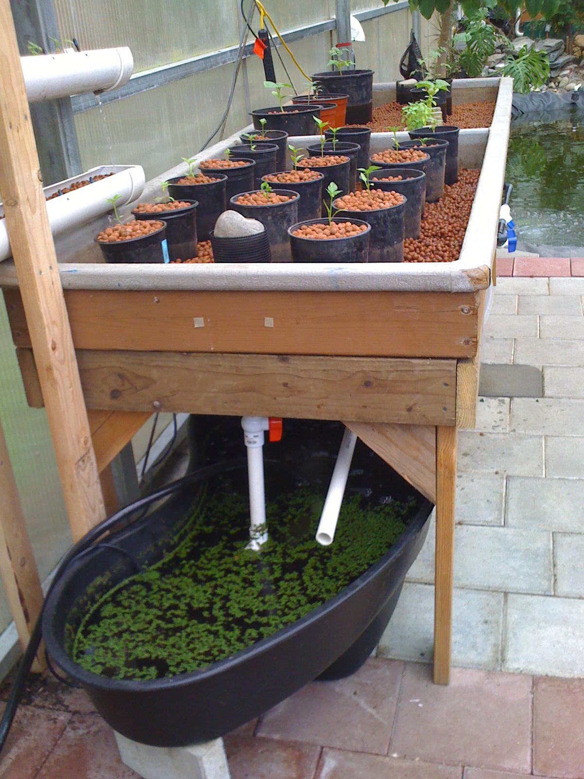 Hydroponics Blog  Healthier Food  New Aquaponics System