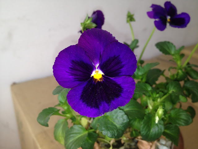 Violet color flowers