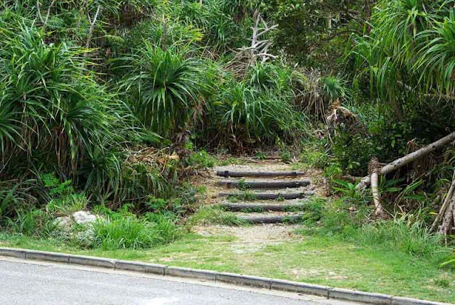 vegetation along a highway, stairs lead to a cave