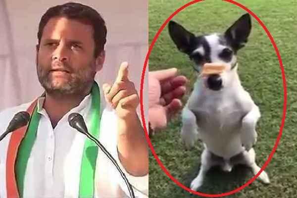 rahul-gandhi-show-his-talent-with-pet-dog-video-viral-news-hindi