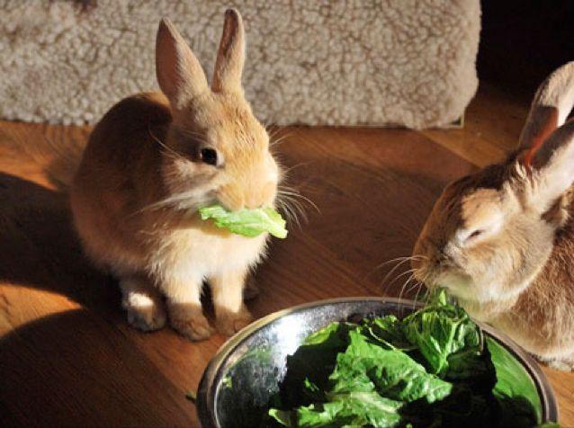 التغذية عند الحيوان