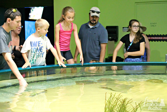 Located just southwest of Kitty Hawk on Roanoke Island is the North Carolina Aquarium. Most of the exhibits here are hands-on & encourage you to touch and interact and fully immerse yourself in the aquatic wildlife of the Outer Banks.