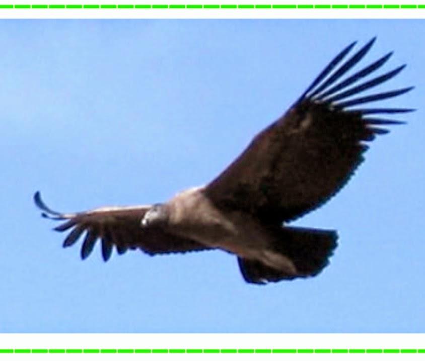 Resultado de imagen de El vuelo majestuoso del Condor