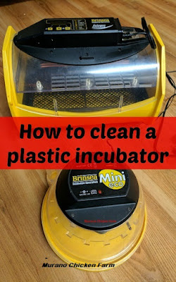 Cleaning an incubator