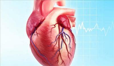 تفسير رؤية القلب فى المنام