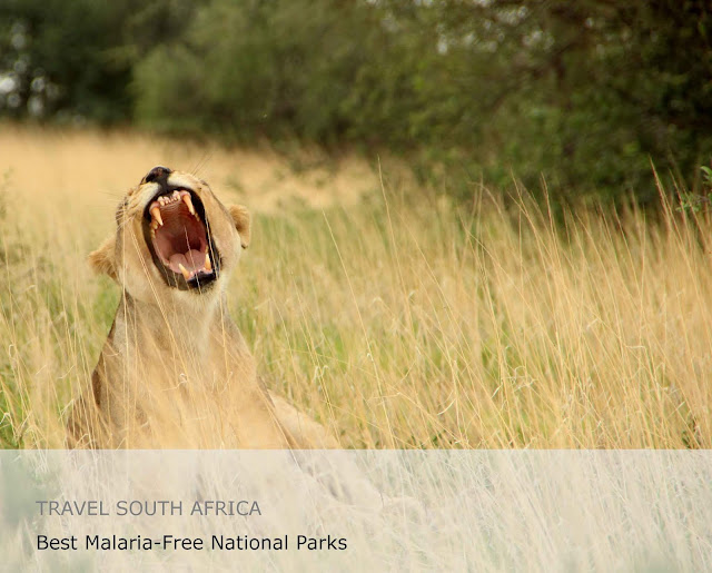 9 Best Malaria-Free National Parks In South Africa