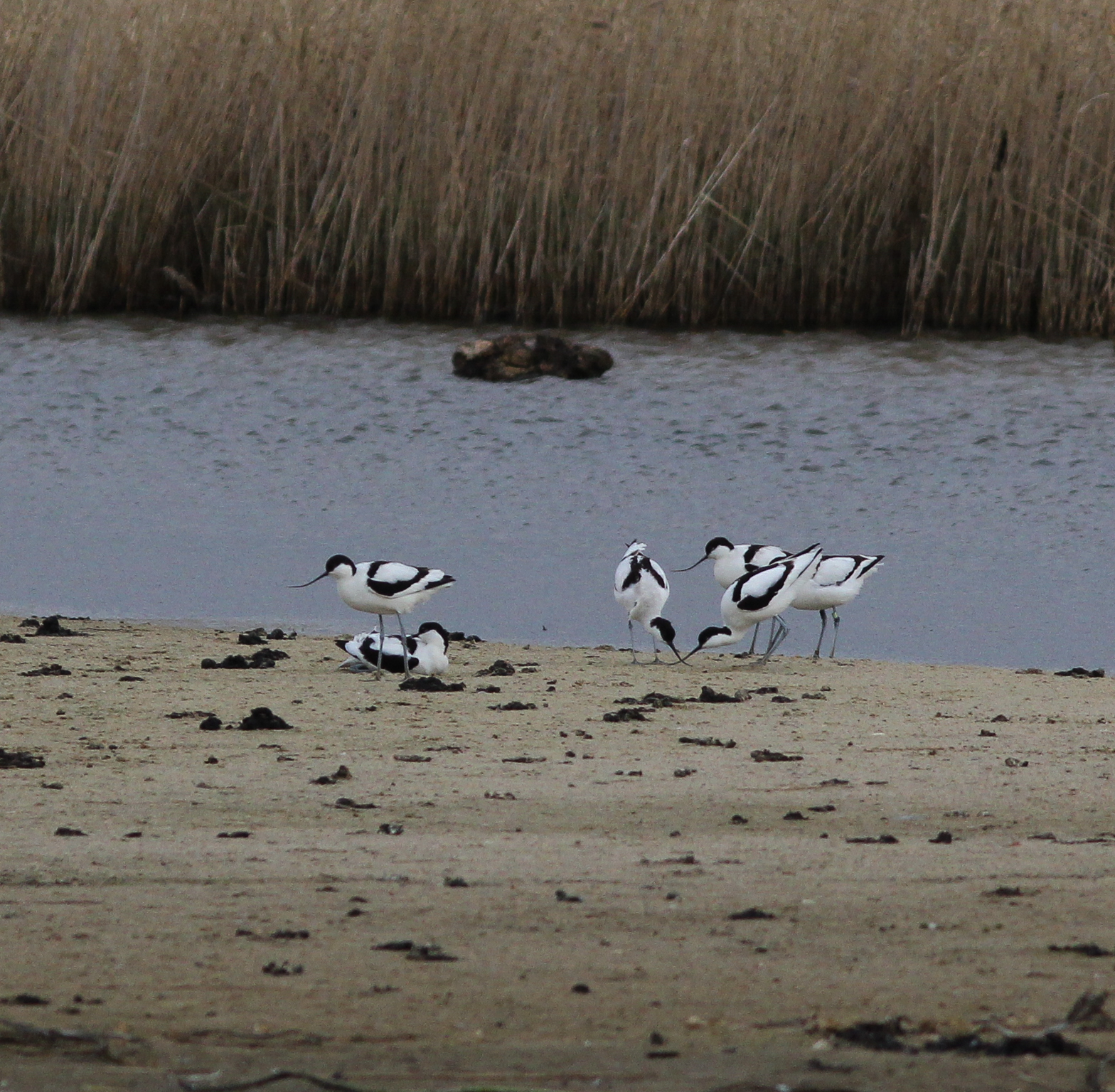 solway black singles The serentity of the solway firth 07/08/2016 lapwing, redshanks, dunnocks, dunlings, egrets, crested grebe, black headed gulls, red shanks, terns.