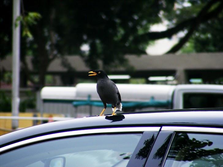 Cara Mengatasi Kotoran Burung di Mobil agar Tidak Merusak Cat