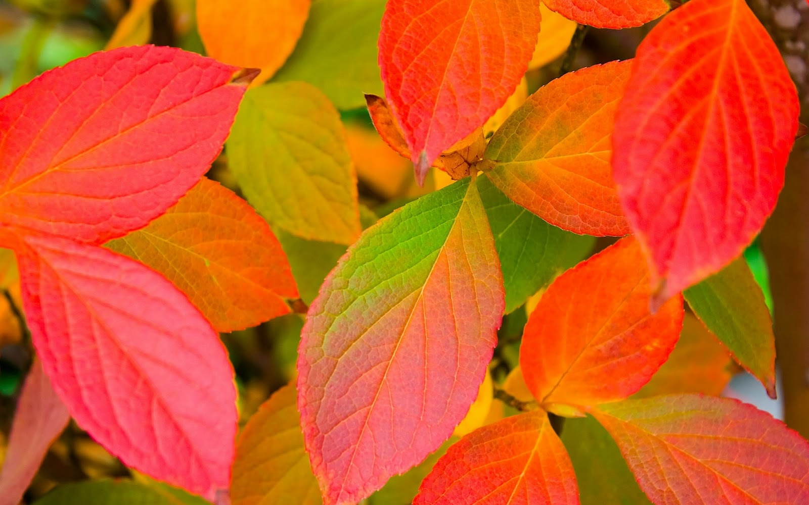 Only-Nature: Beautiful Autumn Leaves Wallpapers